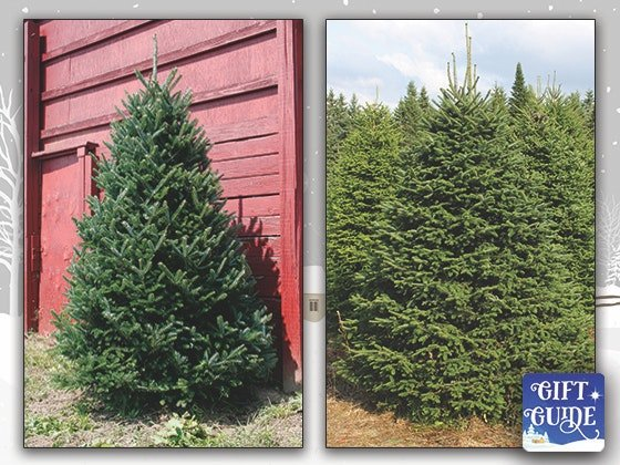 free live christmas tree from green valley first for women